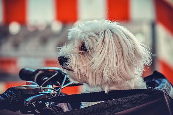 Kupujemy transporter dla psa