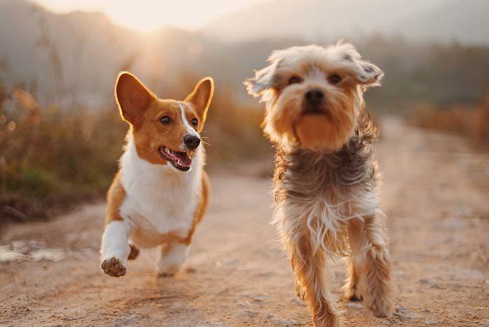 Jak samodzielnie dbać o sierść psa?