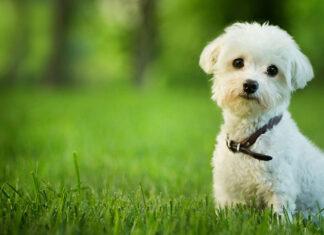 Karma dla małego psa